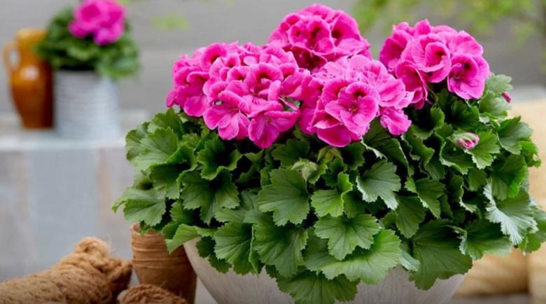 Тези 4 растения у дома ще ви направят червиви от пари